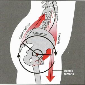 anterior-pelvic-tilt-anatomy